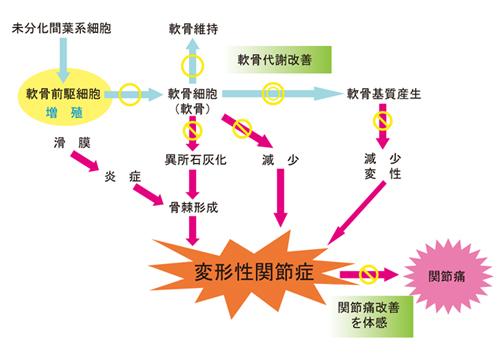 proteoglycan_i38